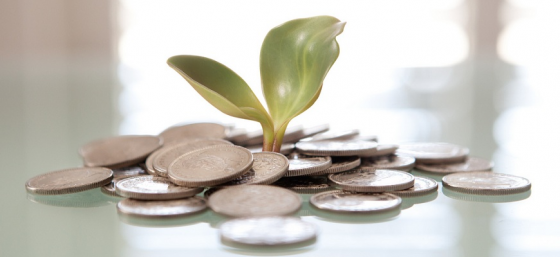 Money Plant by Tax Credits from Flickr