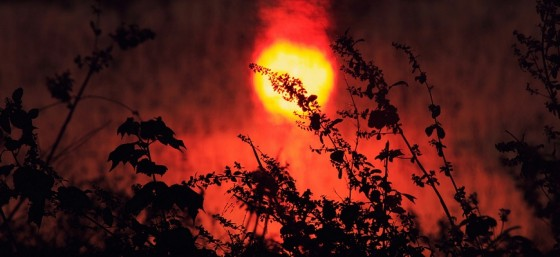 Burning Nature by Vinoth Chandar from Flickr (Creative Commons License)
