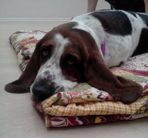 My sweet Rosie dog