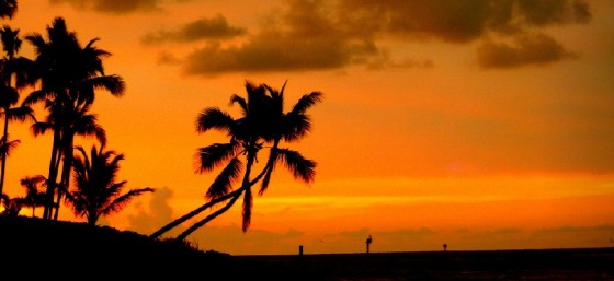 Palm Sunset by Lawrence Rayner from Flickr (Creative Commons License)